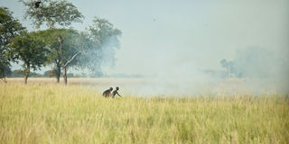 Grass fire in Sudan Stock Images