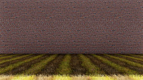 Grass Floor with Bricks  Wall Background Royalty Free Stock Photography