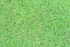 Grass floor in the garden Stock Image