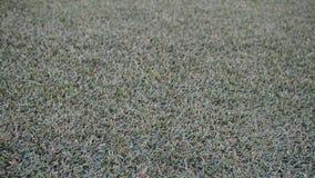 Grass floor pattern Royalty Free Stock Photos