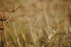 Grass, Flora, Wildlife, Close Up royalty free stock photos