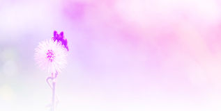 Grass flowe. R in field with gradient Royalty Free Stock Photo