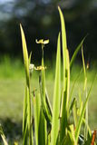 Grass flower. In the morning Royalty Free Stock Photos