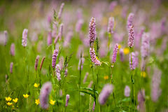 Grass and Flower Royalty Free Stock Photos
