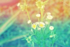 Grass flower  abstarct spring ,summer nature background Stock Image