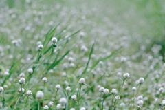 Grass flower background Stock Photos