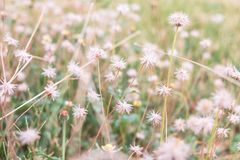 Grass flower background in summer. royalty free stock photos