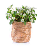 Grass flower in basket Royalty Free Stock Images