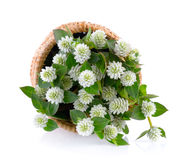Grass flower in basket Stock Images