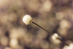 Grass flower,beautiful nature background. Stock Photos