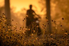 Free Grass Flower Beside The Road On Blurred Background Of People Ride A Motorcycle In The Morning With Sunlight. Morning Golden Royalty Free Stock Photo - 150567485