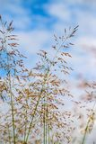 Grass flower with blue sky Stock Photo