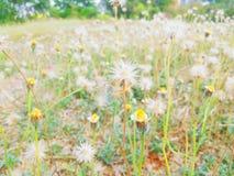 Grass flower blur background Stock Photography