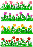 Grass and Flower Border Collection Stock Photo