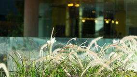 Grass Flower bunches home decoration. Grass Flower bunches or home decoration with glass windows in the background Stock Photography