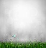 Grass, Flower And Butterflies Stock Image