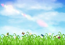 Grass with flower and butterfly ladybug with sky. A grass with flower and butterfly ladybug with sky Royalty Free Stock Photos