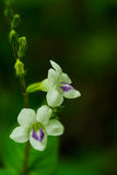 Grass flower or Closeup. White flower Stock Photos