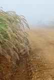 Grass flower,dew and trail under the mist in winter of Thailand Royalty Free Stock Photography