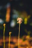 Grass flower evening vintage style Stock Photo
