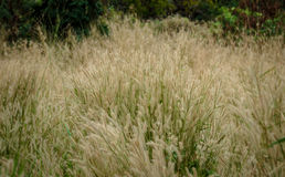 Grass flower field royalty free stock photos