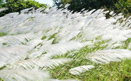 Grass flower field blown away Royalty Free Stock Images
