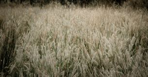Grass flower field with retro color effect royalty free stock photos