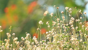 Grass flower field Royalty Free Stock Photo
