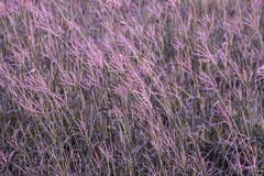 Grass flower field stock images