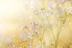 Grass flower field in yellow tone with glitter background with sunlight soft pink tone. Grass flower field in golden tone and glitter background with sunlight stock photos