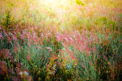 grass flower fields Royalty Free Stock Images