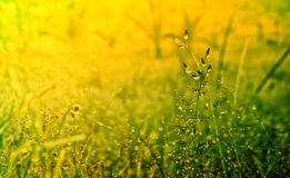 Grass flower fresh nature spring ,autumn wallpaper relax photo background. Grass flower  fresh  nature spring ,autumn ,summer wallpaper relax photo   background royalty free stock image