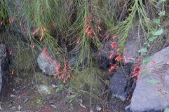 Grass flower stock images