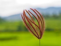Grass flower. In green field Royalty Free Stock Photo
