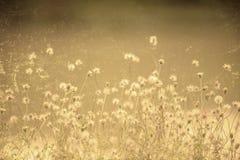 Grass flower. Grunge photo of grass flower Stock Photography