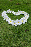 Grass flower heart. Royalty Free Stock Photo