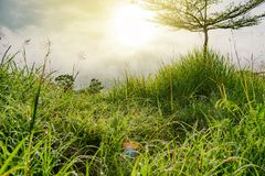 Grass flower grass morning is beautiful. Grass flower grass morning dew is beautiful royalty free stock images