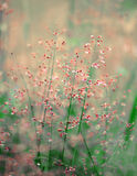 Grass flower in the morning Stock Images