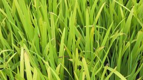 Grass flower nurseries in the park. Photography Royalty Free Stock Image