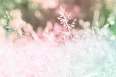 Free Grass Flower  Pastel Color Soft Focus  Spring Background Royalty Free Stock Photo - 95504415