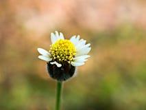 Grass flower. stock photo