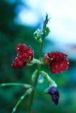 Grass flower. Grass flower in rainy season Royalty Free Stock Image