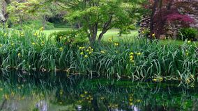 Grass and flower reflections on water on river shore impressionist garden pond panning background.  stock video footage