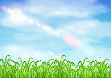Grass and flower with sky background vector. A grass and flower with sky background vector Royalty Free Stock Image