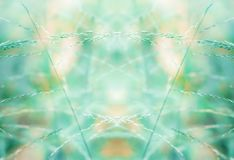 Grass flower spring nature abstract wallpaper background. Green Grass flower spring nature abstract wallpaper background stock images