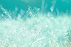 grass flower spring nature relax photo wallpaper Royalty Free Stock Image