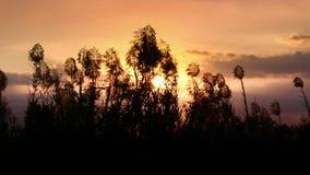Grass flower on sunrise background stock footage
