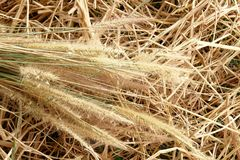 Grass flower thatch straw vintage Stock Images
