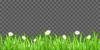 Grass and flower on transparent background vector. A grass and flower on transparent background vector Royalty Free Stock Photo