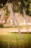 Grass flower with vignette. Royalty Free Stock Photos